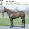2020年 社台RH/サンデーR募集馬 新規検討③サンデーR 関東 牝馬