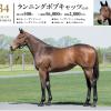 2020年度 シルク募集馬 新規検討②関東牝馬