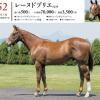 2020年度 シルク募集馬 新規検討③関西牡馬