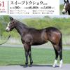 2020年度 シルク募集馬 新規検討④関西牝馬