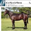 2020   ウイン募集馬新規検討①