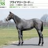 2021年 社台RH/サンデーR募集馬 新規検討④社台TC 関東牝馬