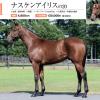 2021年 キャロットクラブ募集馬 新規検討② 関東牡馬