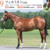 2021年 キャロットクラブ募集馬 新規検討③ 関東牝馬