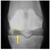 馬の資料室(日高育成牧場): 大腿骨内側顆のボーンシストについて
